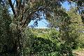 Malta - Siggiewi - Triq il-Buskett - Buskett Gardens + Verdala Palace 07 ies.jpg