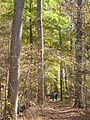 Mammoth Cave National Park FAMILYHI.jpg