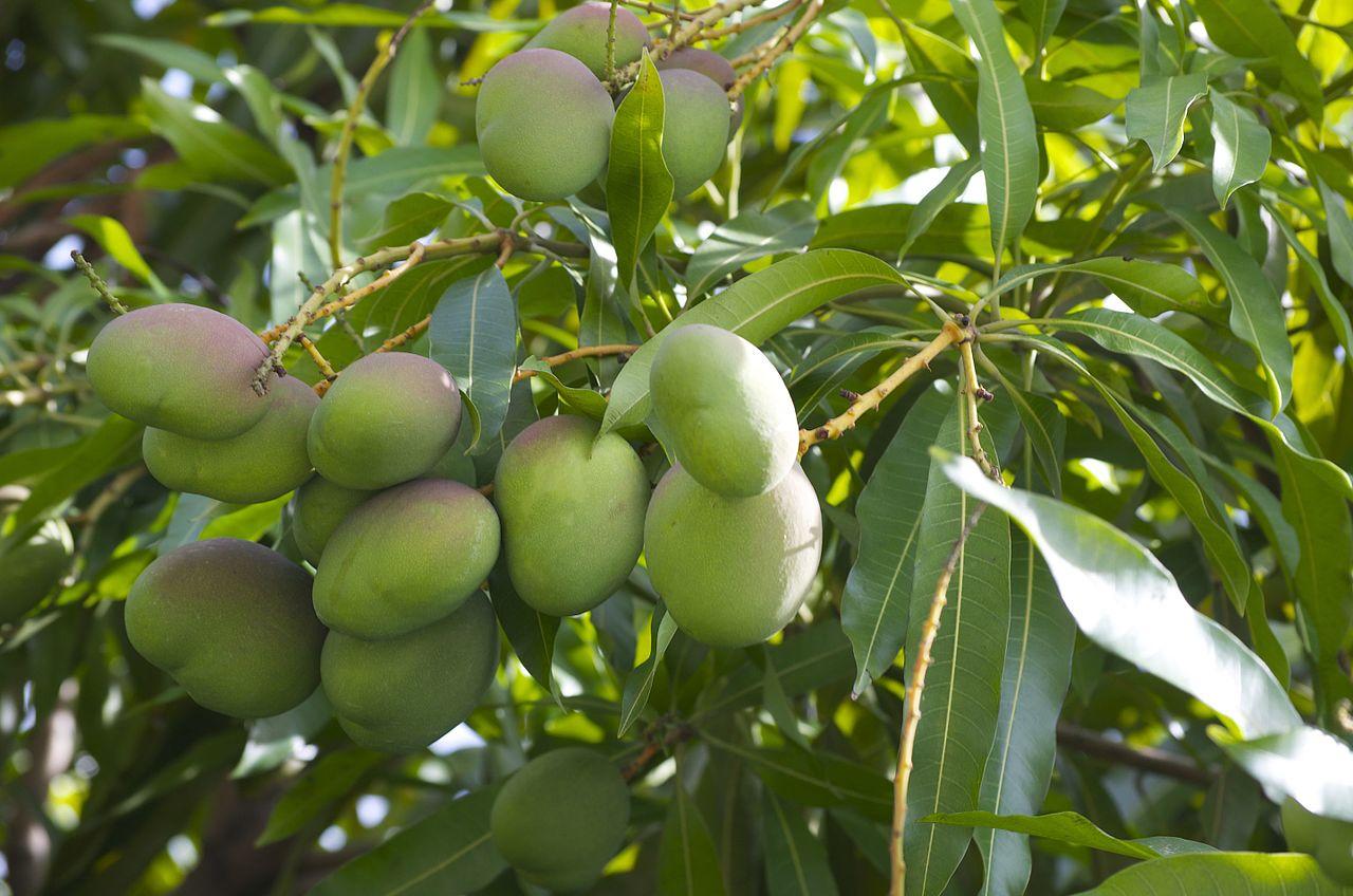 Green Mango Thai Food Barrie