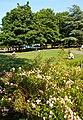 Manor Park, Sutton, Surrey, London - Flickr - tonymonblat.jpg