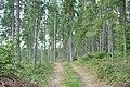 Meža ceļš - panoramio (14).jpg