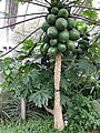 Medicinal Plants - US Botanic Gardens 38.jpg