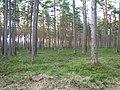 Melluzu mezs - panoramio.jpg