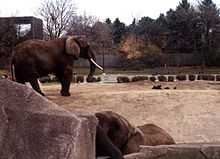 Milwaukee County Zoo elephants.jpg