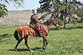Mongolian rider 1.jpg