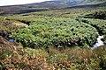 Moorland Meander - geograph.org.uk - 1491027.jpg