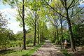 Morris Arboretum - DSC00514.JPG