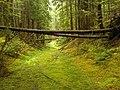 Mossy road - panoramio.jpg
