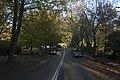 Mount Wilson NSW 2786, Australia - panoramio (14).jpg