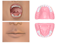 Mouth (Child).png