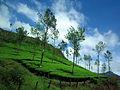 Munnar Hillscape.jpg