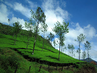 Wayanad Nature Tours-day
