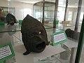 Musée hippone annaba 05.jpg