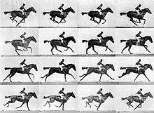 Muybridge race horse gallop.jpg