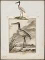 Mycteria americana - 1700-1880 - Print - Iconographia Zoologica - Special Collections University of Amsterdam - UBA01 IZ17600051.tif