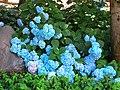 NJ LBI Flowers 01.jpg