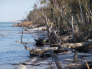 Western Pomerania Lagoon Area National Park - Coastal vegetation