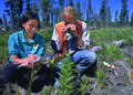 NRCSAK97013 - Alaska (157)(NRCS Photo Gallery).jpg