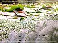 Nach jedem Regentropfen, scheint auch mal irgendwann die Sonne! 2014-05-01 12-41.jpg