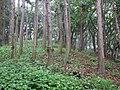 Nagaesakurayama-1gou3.jpg