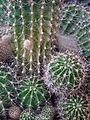 Nahaufnahme Kaktus.JPG