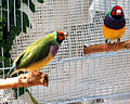 National Aviary (13020026165).jpg