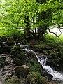 Naturbach in Thüringen.jpg
