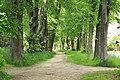 Naturdenkmal Lindenallee in Lößnitz Erzgebirge 2H1A2701WI.jpg