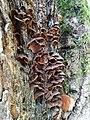 Nature of Lasy Bierzwnickie (12).jpg