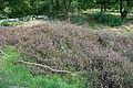 Naturschutzgebiet Aechelbur 04.jpg