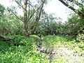 Naturschutzgebiet Heuckenlock 21.05.2014 Phase 108.JPG