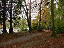 A woodland track leads through tall trees, some with the grown and gold leaves of autumn. There is an orange leaf litter on the ground. A body of water is visible through the trees to the left.