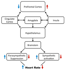 Heart rate variability - Wikipedia