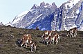 New 2678 Chile Torres del Paine JF.jpg