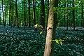 Nordkirchen, Naturschutzgebiet Ichterloh -- 2018 -- 2306.jpg