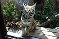 Oji zoo, Kobe, Japan (38128409652).jpg
