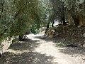 Olive grove - panoramio (2).jpg