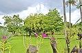 Orchid Garden Bali Indonesia - panoramio (11).jpg