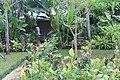 Orchid Garden Bali Indonesia - panoramio (32).jpg
