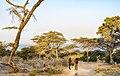 Oromia IMG 5170 Ethiopia (27855421129).jpg