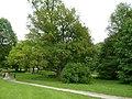 Ostromecko - park pałacowy. - panoramio.jpg