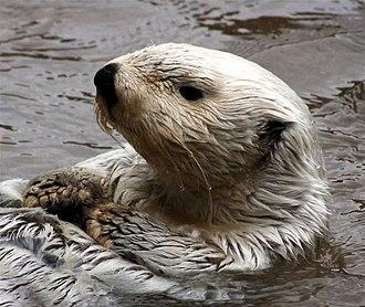 Sea otter - 150 px