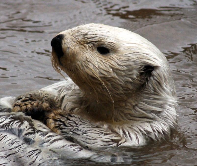 Otter3