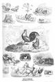 Otto Speckter - Szenen vom Hühnerhof.png