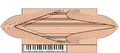 Oval spinet plan.PNG