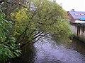 Over-hanging tree, Camowen River - geograph.org.uk - 1545114.jpg