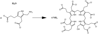 Porphobilinogen deaminase - Overall reaction of PB deaminase