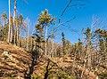 Pörtschach Winklern Bannwaldweg 8 Waldlichtung 25122017 2195.jpg