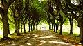 Pałacowy park - panoramio (9).jpg