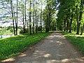 Pašešupio parkas. Alėja.JPG